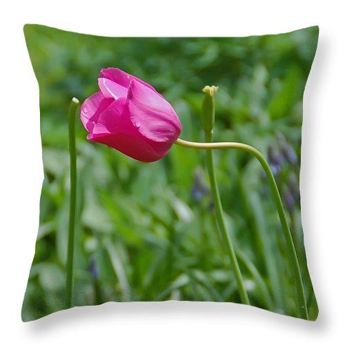 "Pink Tulip Throw Pillow for Sale by Aimee L Maher Photography and Art Visit ALMGallerydotcom. Our throw pillows are made from 100% spun polyester poplin fabric and add a stylish statement to any room. Pillows are available in sizes from 14""x14"" up to 26""x26"". Each pillow is printed on both sides (same image) and includes a concealed zipper and removable insert (if selected) for easy cleaning. Ships within 2-3 business days"