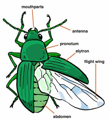 Insect Anatomy- blending insects 6th grade lesson
