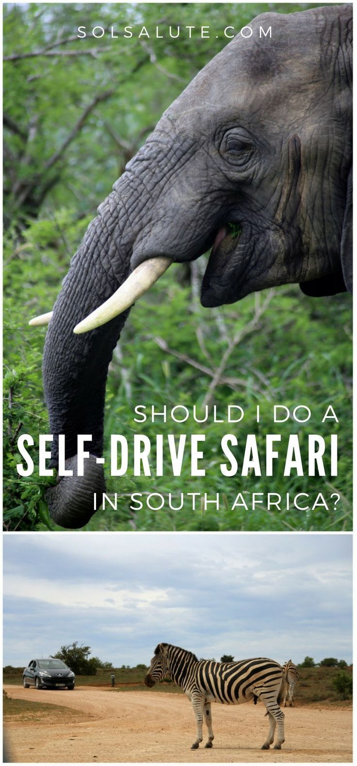 Tips and advice on doing a self-drive safari in South Africa