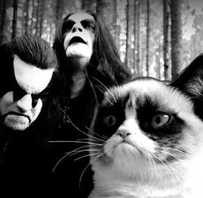 Death Metal Cats : death metal cat quotes funnies random things pinterest ~ Vivirlamusica.com Haus und Dekorationen