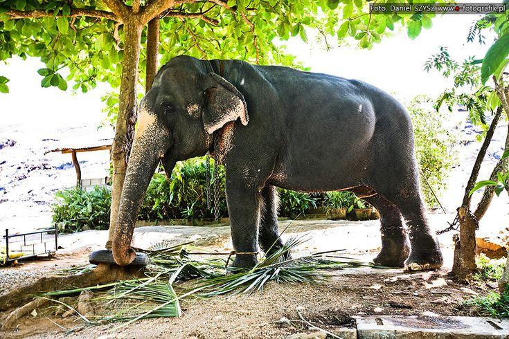 słonie #srilanka #slonie #słoń