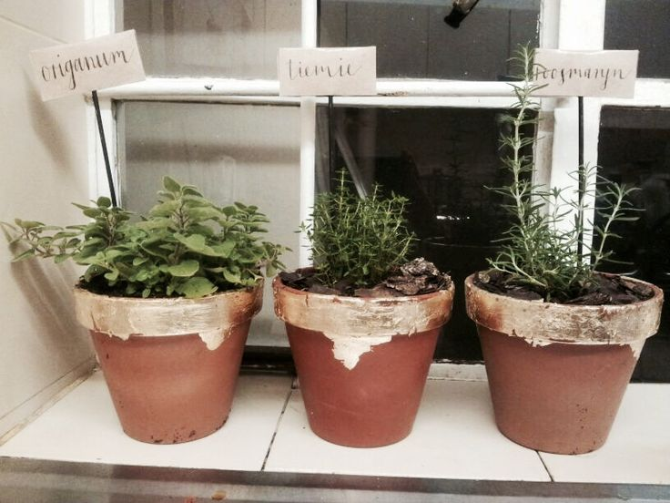 Gold foil herb planters