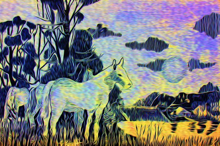 White stallion horse sunset #horse by Simon Knott ~ website * simbird.com
