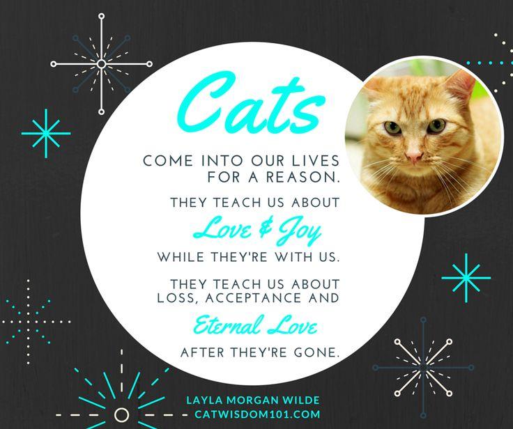 Cat Loss Quotes Enchanting Pet Cat Loss Sayings Quotes