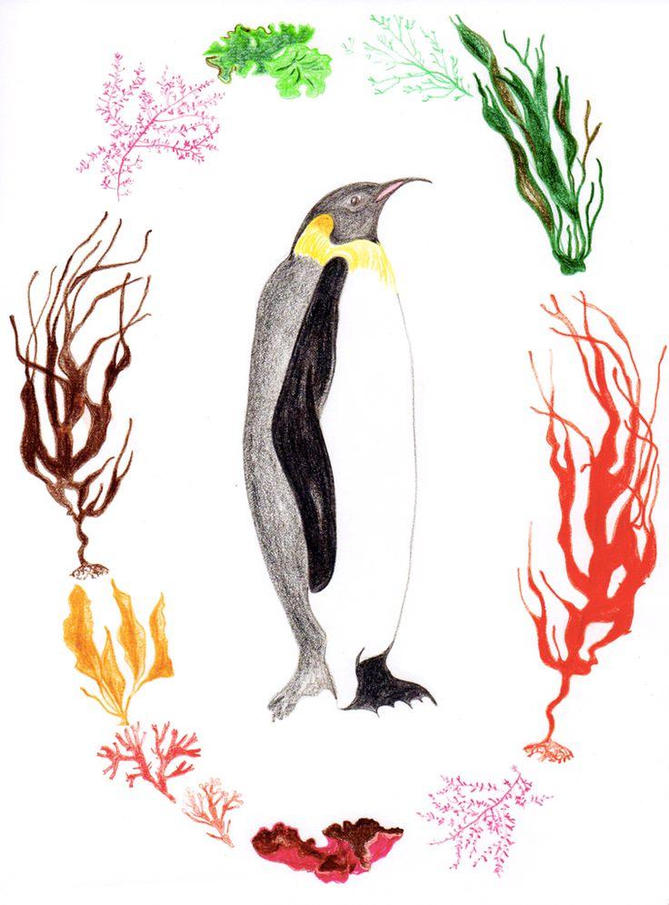 Pingüino emperador. Serie flora y fauna chilena. Lápiz a color. Por Coco & Co