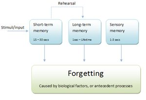 ''Note that in this diagram, sensory memory is...