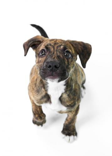 Pitbull Puppy Pictures [Slideshow]