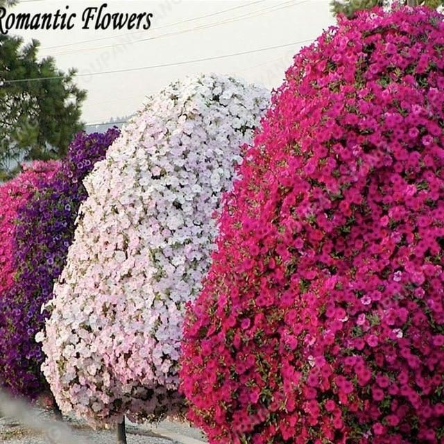 100 Pcs Bag Petunia Bonsai Petunia Flowers Beautiful Flower Bonsai Bonsai Petunia Perennial Flowers Garden Plants Free Shippi Petunias Tree Seeds Bonsai Garden