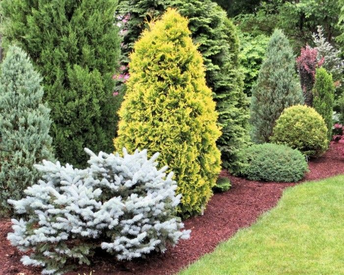 Best 25+ Evergreen Landscape Ideas On Pinterest | Privacy Landscaping, Evergreen  Garden And Blue Spruce