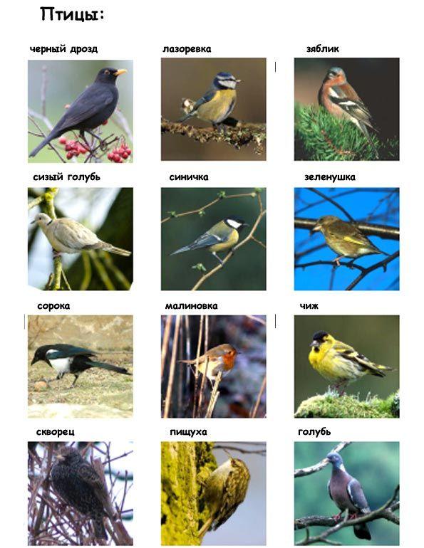 скачать картинки птиц
