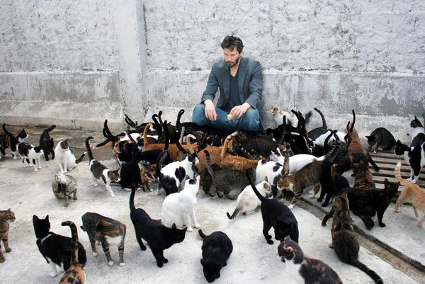 One of these things is not like the others....  Could it be Keanu Reeves?