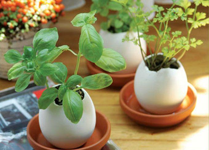 """esses """"vasinhos"""" de casca de ovo natural são ótimas fontes de cálcio para as mudas e podem depois ser enterradas para continuar a plantação no jardim"""