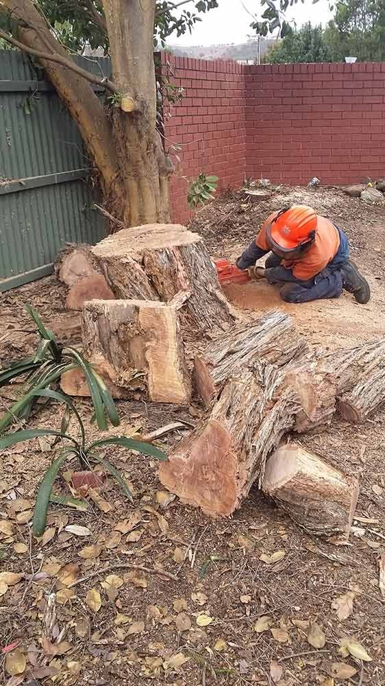 Are you looking for Reliable and Professional Tree Removal  Services in Adelaide? Call our friendly team today on 0439 686 959 and Get the Professional Tree Removal  Services Adelaide at Affordable Prices!