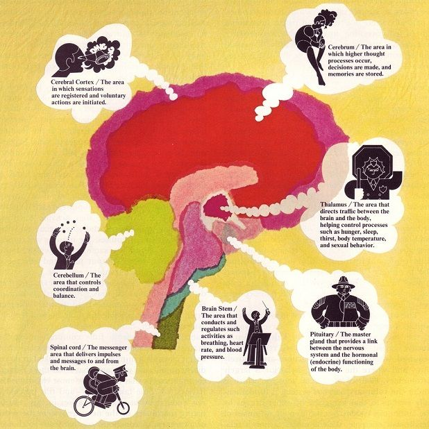 Educational psychology: 20 Things Educators Need to Know About How Students Learn