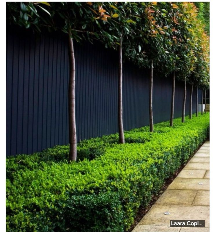 Amazing clipped shrubs and trees in front of dark grey fence.