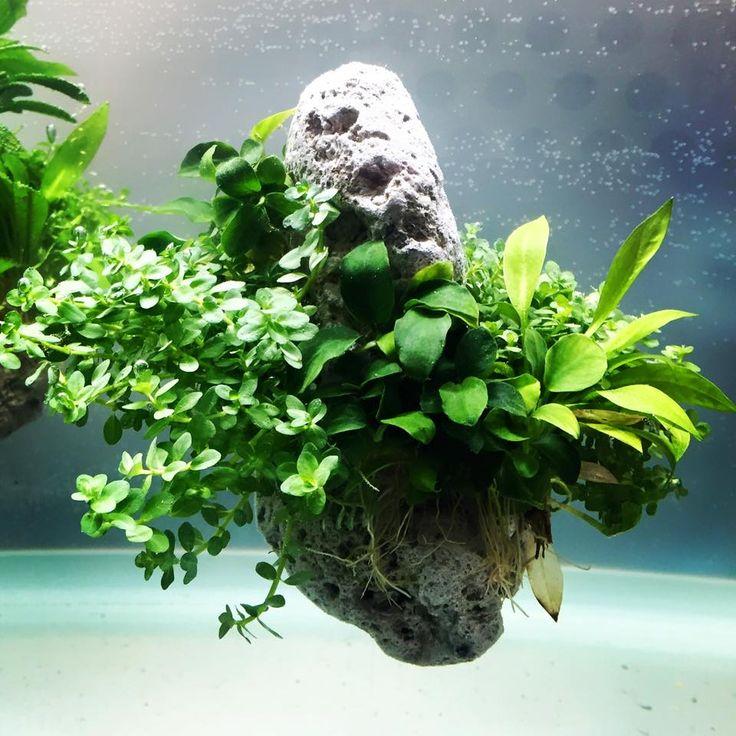 Les 379 meilleures images du tableau aquatic plants sur for Amenagement jardin wepion