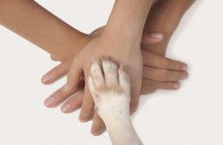 The food doggers: Interventi assistiti dagli animali: i membri dell'...