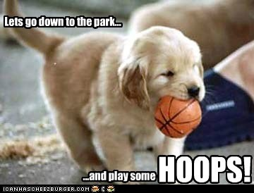 Lets go down to the park...: Dogs Breeds, So Cute, Pet, Plays, Adorable, Air Bud, Airbud, Animal, Golden Retriever Puppies