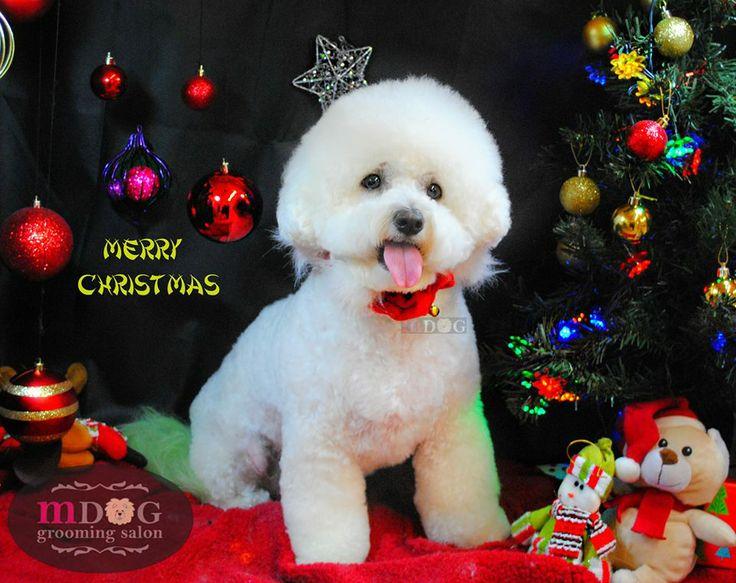 Merry Christmas Cinta!