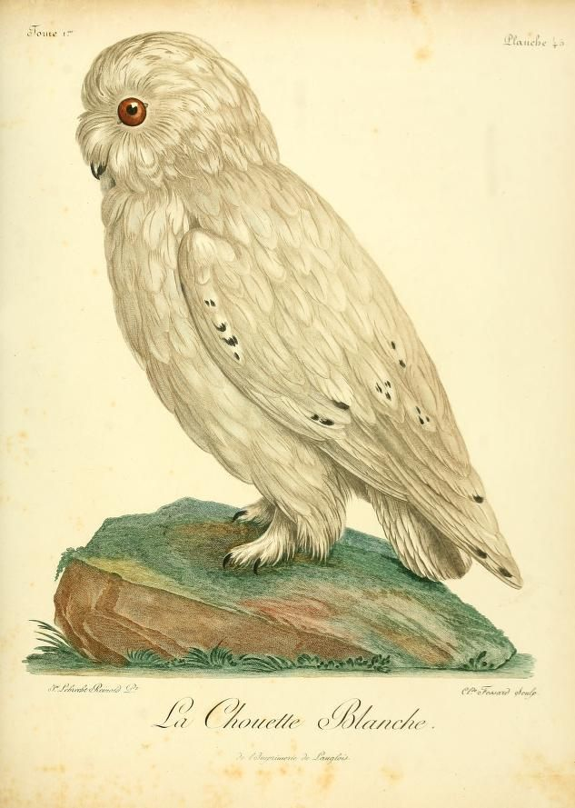 t. 1 - Histoire naturelle des oiseaux d'Afrique / - Biodiversity Heritage Library