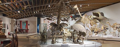 Zoological museum - university of Copenhagen