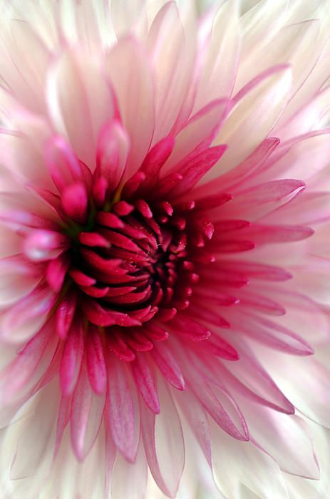 Splash Of Pink Photograph by Deb Halloran - Splash Of Pink Fine Art Prints and Posters for Sale