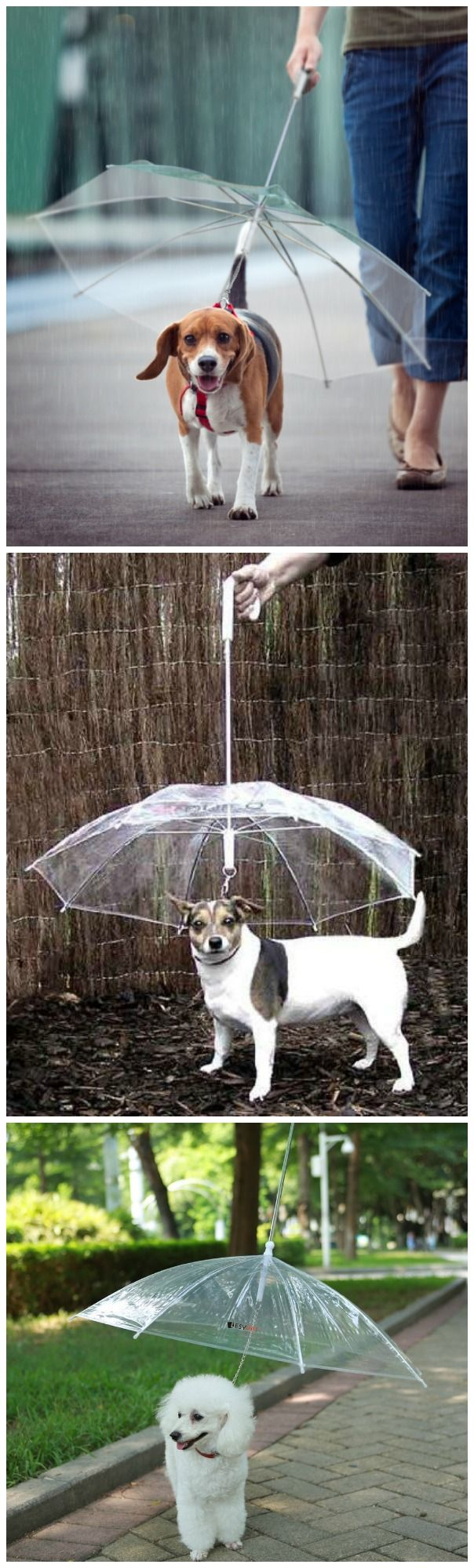 What a great idea! An umbrella designed to keep your furry friend dry when taking walks in the rain. #affiliate