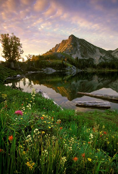 Wallows Mountains, Oregon. I want to live here, sweets. Is that ok?