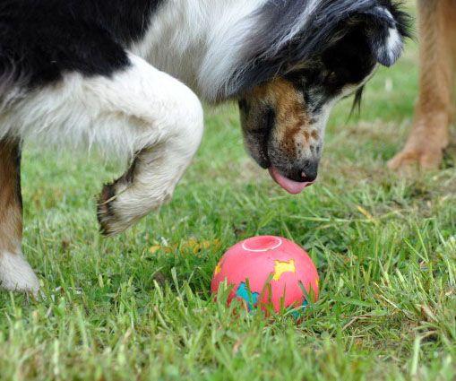 Spiele für Hunde: Such-, Denk- und Bewegungsspiele rund ums Futter
