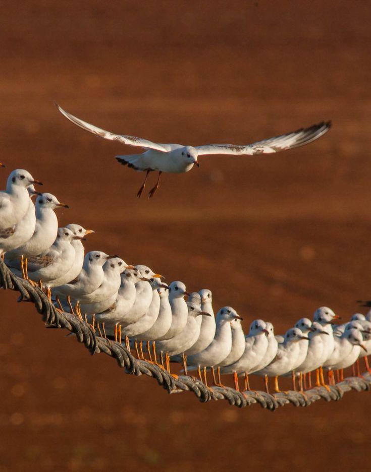 colorel11:  © NeGGGorich..seagulls team