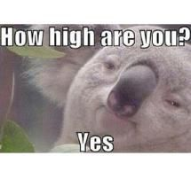 The Best 4/20 Weed Jokes and Memes: How do you know when you have smoked enough pot?