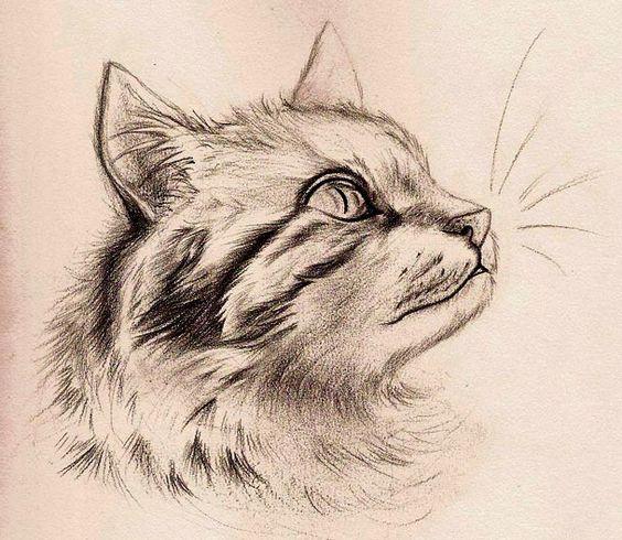 Fun with Detail - Cat by Mitch-el on DeviantArt: