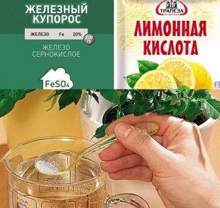 В 3 л холодной кипяченой воды растворяют 1 ст. л. лимонной кислоты. К ним добавляют около 2 ч. л. сульфата. После перемешивания компонентов раствор станет светло-оранжевым.  2. 1 ч. л. сернокислого железа разводят в 0,5 л холодной кипяченой воды. К ним добавляют 10 г аскорбиновой кислоты (используют чистый препарат, без глюкозы и пр.). Полученный раствор разводят в 3 л воды.