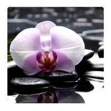 Orchidea falikép