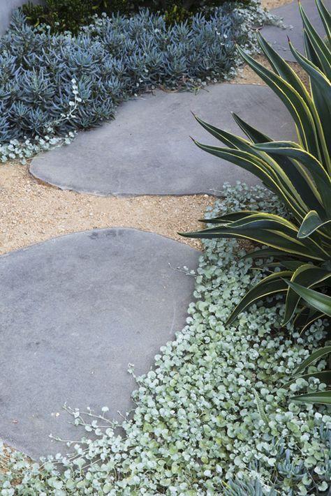 #peterfudge, Dichondra, flagstone and decomposed granite ground cover.                                                                                                                                                      More