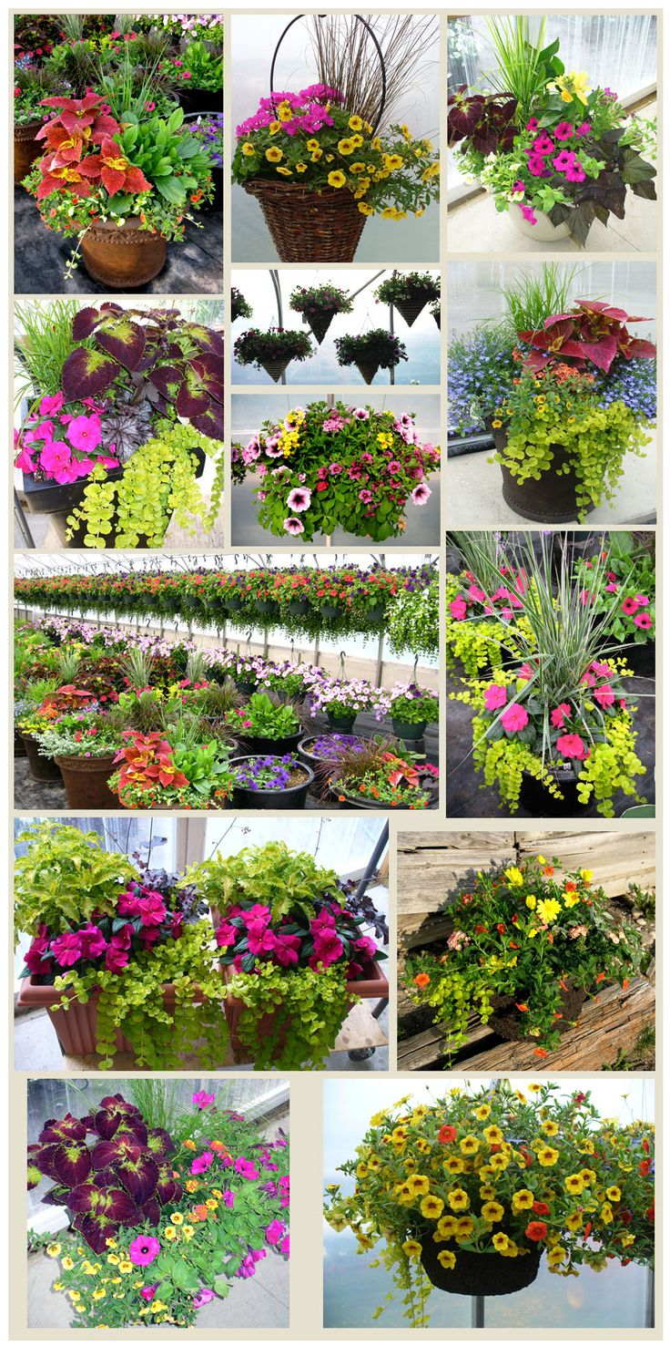 Potted Plants and Color Combos