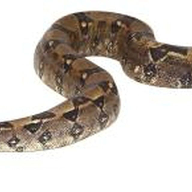 Using repellents can prevent snakes from entering your lawn.