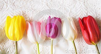 Some tulipd with different colors on white background