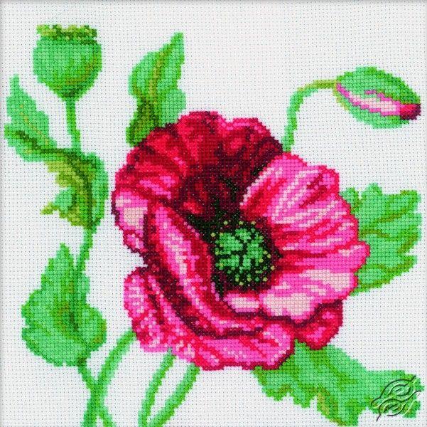 Poppy II - Cross Stitch Kits by RTO - M083