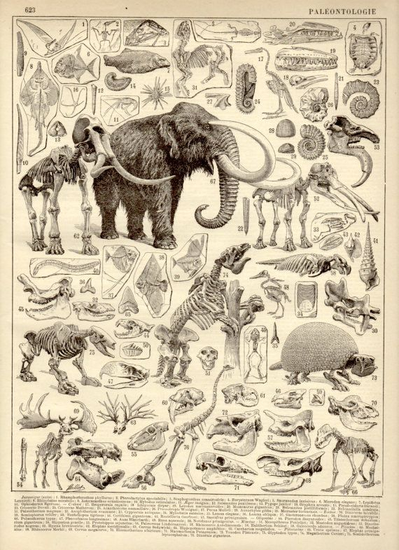 Paleontology Antique Print 1897 Lithograph by Craftissimo on Etsy, €12.00