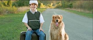 proses pet relocation untuk hewan peliharaan