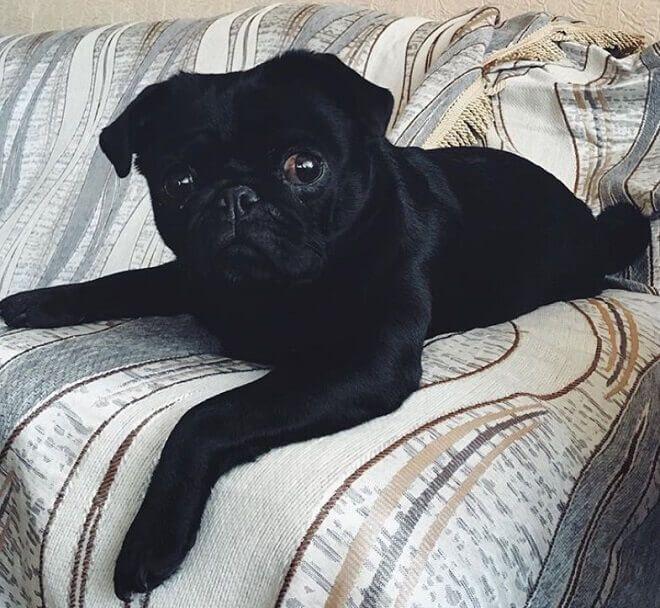 120 Black Girl Dog Names Dog Names Girl Dog Names Girl And Dog