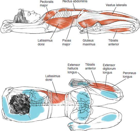 ynspirations: Supta Virasana Reclinado héroe Pose Yoga BENEFICIOS anatomía del © Leslie Kaminoff - Estira el abdomen, los muslos y flexores de la cadera profundos (psoas), las rodillas y los tobillos - Fortalece los arcos - Alivia las piernas cansadas - Mejora la digestión - Ayuda a alivia los síntomas del dolor menstrual ❤ Yoga Inspiration Comprarlo aquí http://amzn.to/1ctMdtp http://ift.tt/18hDKoD