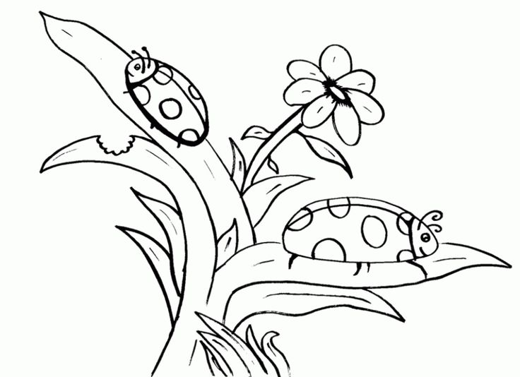 The 25+ best Ladybug coloring page ideas on Pinterest | Basteln ...