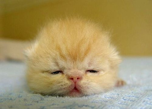 """""""I hate mornings"""" .....................................Baby Animals by queenmichelle, via Flickr"""
