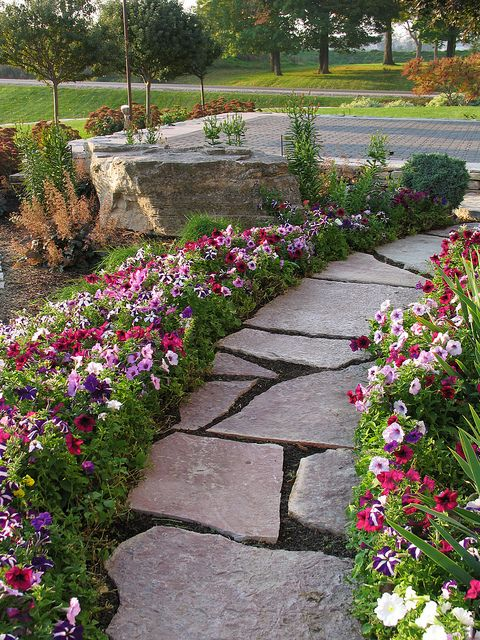 Petunias lining stone walkway