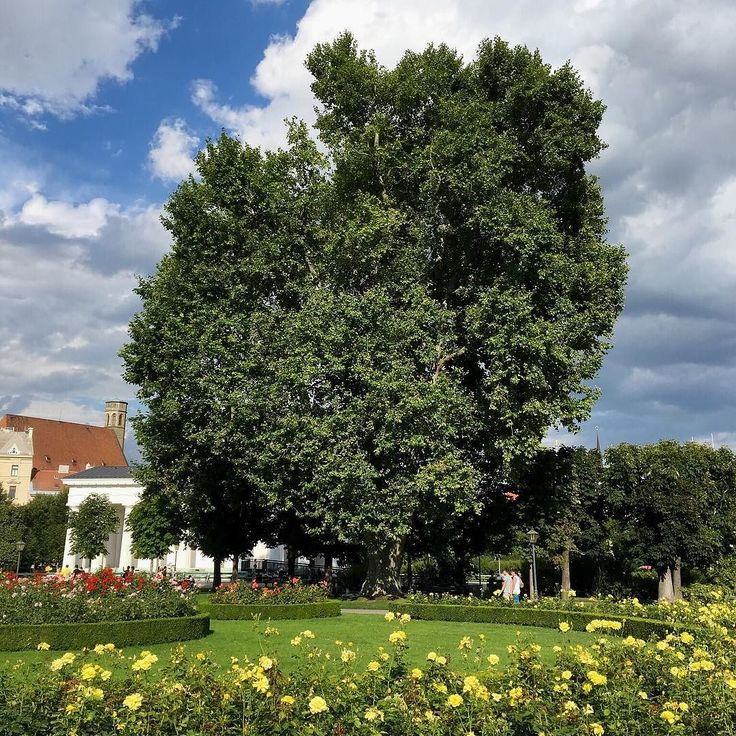 A lone tree. --- #volksgarten #vienna #wien #austria #europe #green #tree #nature #grass #flowers #cloudy #sky #blue