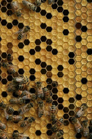 Beehive - via إبداع الخالق. a complex architectural structure