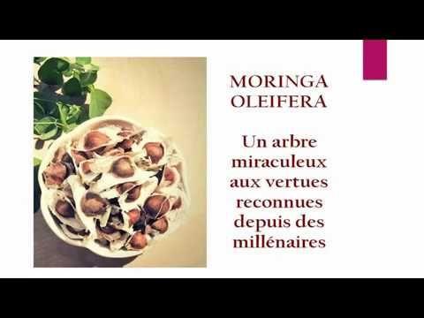 Moringa Oleifera de puissants avantages santé - Curcuma & Curcumine santéCurcuma & Curcumine santé