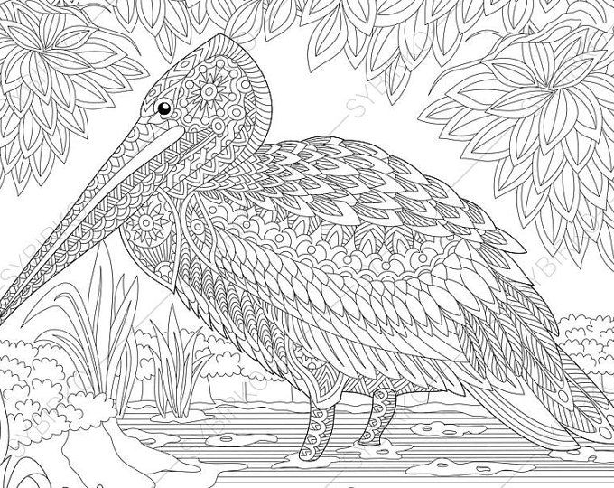 cockatoo parrot coloring page animal coloring book pages
